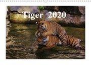 Bild von Tiger 2020 (Wandkalender 2020 DIN A3 quer)